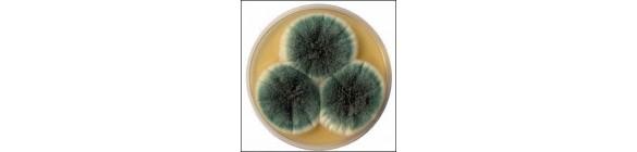 mycose en schimmel